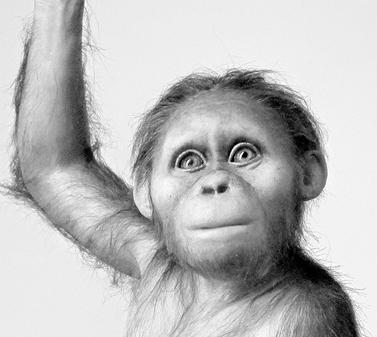 人类祖先阿法南方古猿大脑与类人猿相似 但发育缓慢
